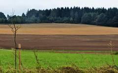 Felder vorm Wald bei Neusa (zikade) Tags: neusas felder wald braun herbstfarben