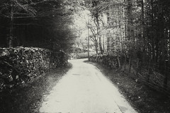 Wooded Road (MacBeales) Tags: cumbria lake hills district uk britain black white blackwhite canon eos 70d artlegarth woods wall trees gate way ahead