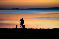 76 One man and his dogs (NSJW photos) Tags: silhouette silhouettes man dogs two aberlady scotland sea reflections nsjwphotos