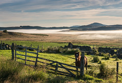 Horse and Misty View (Geoff France) Tags: cabrach moor moorland landscape scottishlandscape mist mountain horse fence meadow highlands scottishhighlands