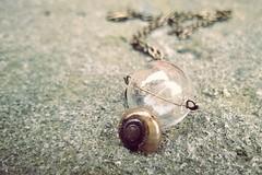 ...anlehnen... (***étoile filante***) Tags: soulful snail schnecke emotions emotional poetic poetisch snailshell schneckenhaus kette fairytale märchen dream traum imagination dandelionseeds dandelion pusteblume