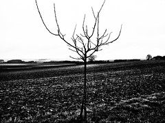 loneliness (zbigphotography (1M+ views)) Tags: winter blackandwhite bw france cold tree monochrome landscape europe loneliness earth farm farmland lonely solitary barren lorraine photomix canong12 creativephotocafe