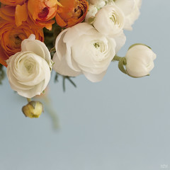 Flowers II (idni . idniama) Tags: flowers stilllife orange white flores primavera 50mm spring nikon ramo gettyimages 2013 idni gettyimagesiberiaq3