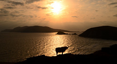 Sunset Blasket Islands (Barbara Walsh Photography) Tags: ireland light sunset seascape water sheep kerry blasketislands