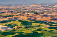 Palouse Evening Light Ripples (Ryan McGinty) Tags: usa landscape washington wheat farmland ripples rollinghills palouse whitmancounty wondersofnature ryanmcginty