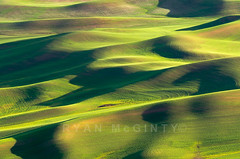 Another Palouse Spring Abstract (Ryan McGinty) Tags: statepark usa landscape washington spring wheat rollinghills palouse whitmancounty steptoebutte ryanmcginty