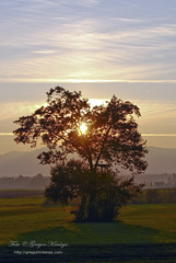 blizu doma (gregork.) Tags: sunset tree sunrise selo jesen sonnizahod
