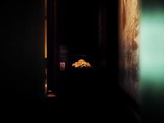 Plaster Covering from a Human Skull - Stucküberzug von menschlichem Schädel, Armen, Beinen, ... - Kunsthistorisches Museum - Im Schatten der Pyramiden