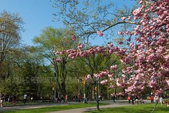 Spring in New York (juliacreinhart) Tags: nyc newyorkcity flowers trees newyork skyline brooklyn spring centralpark manhattan bloom greenpoint
