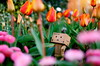 danbo_004 (iskandarbaik) Tags: park uk flowers england cute home bristol toy photography spring colorful colours bokeh outdoor manga cardboard tulip coloring daffodils hyacinth yotsuba danbo danbooru revoltech danboard cardbo danboru