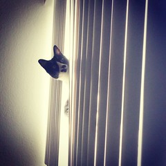 Just Peeking (kristelyoneda) Tags: cute cat buster cutecat iphone