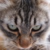 U talkin 2 ME? (DomiKetu) Tags: pet cats pets cute green animal animals cat eyes kitten olympus youtalkintome xz1