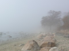 misty day walk (veebruar) Tags: trees sea stones shore vanagram mistydaywalk