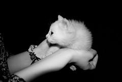 Fear (motumen) Tags: cat fear gatto bianco nero paura