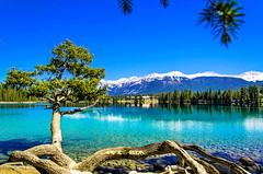 DSC_4414-01 (arvic_81) Tags: mountains spring nikon jasper lakes alberta albertacanada jaspernationalpark d7000