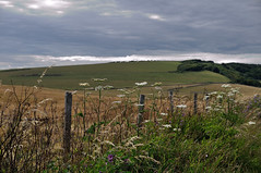 South downs National park East Sussex (sharpshooterjan) Tags: downs south