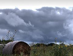 The storm is coming (lamnn92) Tags: bonham texas hay bales wild sunflower clouds storm overcast sky travel panasonic lx7