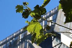 Cooper Union and Neighborhood (ShellyS) Tags: nyc newyorkcity manhattan buildings eastvillage streets leaves
