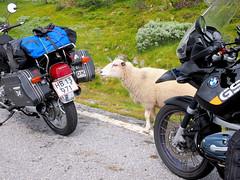 Well perhaps the packs taste good? (topzdk) Tags: norway mc motorcycle honda bmw 2016 summer austagder vestagder nature