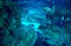 ocean life (M00k) Tags: oceanlife sortof aquarium sansebastian donostia spanje spain
