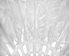 Feather LIGHT (LOVE.OVER.LUST.) Tags: macromondays sports badminton shuttlecock highkey white summerolympicgames feathers