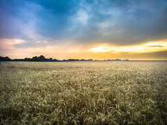 Sunset over wheat (Hasan Yuzeir) Tags: sunset wheat sky cloud sun summer harvest color blue yellow hasanyuzeir samsung galaxy phone