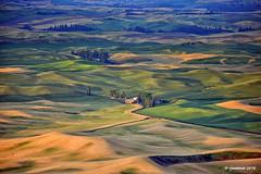 The Palouse_161688 (rjmonner) Tags: washington wheat palouse agriculture agronomy farming fields rural sunrise loess legumes