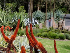 Guilfoyle's Volcano at the  Royal Botanic Gardens, Melbourne - late winter (set of 11) (Lesley A Butler) Tags: victoria royalbotanicgardens nature melbourne landscape guilfoylesvolcano garden australia