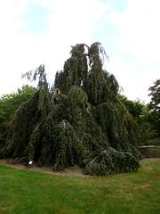 Bayard Cutting Fields Arboretum (8) (pensivelaw1) Tags: suffolkcounty newyorkstate longisland bayardcuttingarboretumstatepark