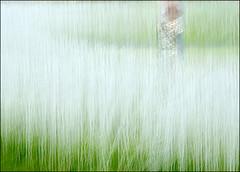 F_DSC8542-1-Nikon D800E-NIkkor 28-300mm-May Lee  (May-margy) Tags: maymargy             taiwan repofchina streetviewphotographytaiwan linesformandlightandshadows mylensandmyimagination naturalcoincidencethrumylens blur bokeh fdsc85421 portrait viewfromback grass hsinchucity nikond800e nikkor28300mm maylee