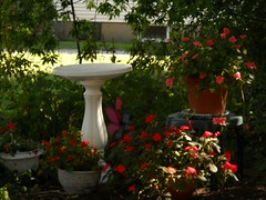 Summer flowers (Maenette1) Tags: flowers summer backyard menominee uppermichigan nikoncoolpixl22camera birdbath