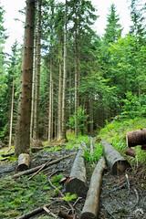 Utrudnenia na szlaku prowadzącego do Stecówki (czargor) Tags: beskidy beskidslaski mountains mountainside baraniagora sightseeing