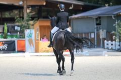 IMG_7750 (dreiwn) Tags: dressage dressur dressuur pferd reitturnier turnierreiten pferdesport horse horseback horseriding equestrian reitverein dressurprfung kandare doublebridle reiten pferde reitplatz ridingarena