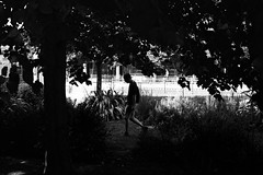 Sous les arbres (stephen cosh) Tags: 50mmsummicronapo analogue blackandwhite brighton candid england film ilfordxp2 leicam7 people stephencosh streetphotography