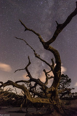 Driftwood Beach and Milky Way (DancingTerrapin) Tags: driftwood driftwoodbeach milky way milkyway stars space time dead tree trees island jekyllisland jekyllislandga jekyllislandgeorgia jekyll georgia ga clouds cloud beach ocean sand night cosmos saturday august 2016 landscape landscapes upright portrait branches branch dark