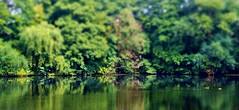 Afternoon (farmspeedracer) Tags: nature landscape lake pond germany summer august mallard bird green tree park forrest duck animal heat sunny vacation