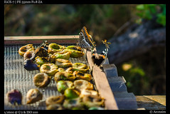 Incoming (Falcdragon) Tags: sonnar5518za sonyzeisssonnarfe1855mmza sonya7alpha ilce7 croatia zaglav morning light figs drying insects bokeh dugiotok butterfly wasp