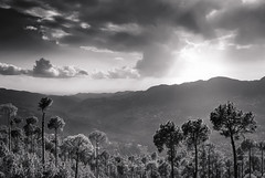 Thinking of Ansel. (Fortunes2011. Closure of 6 years) Tags: landscape patriata murree trees treetops sky clouds sunlight mountains pakistan bw blackandwhite monochrome pine