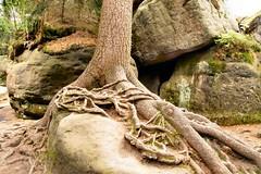 wandering rocks........... (atsjebosma) Tags: rocks rotsen wandering dwaalrotsen polen poland bledneskaly atsjebosma augustus 2016 ngc