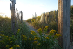 DSC06149 (Putneypics) Tags: autumn beach path fence goldenrod sunset shore coast capecod falmouth putneypics