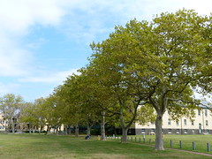 London Planes at the Fort Hancock Parade Ground (Dendroica cerulea) Tags: londonplane londonplanetree platanusacerifolia platanaceae proteales tree foliage leaves building field sky clouds autumn bioblitz2016 nationalparksbioblitz2016 nps100 sandyhookbioblitz2016 sandyhookbioblitz bioblitz usnationalregisterofhistoricplaces nationalregisterofhistoricplaces forthancockandsandyhookprovinggroundnationalhistoriclandmark forthancock sandyhook gatewaynationalrecreationarea monmouthcounty nj newjersey