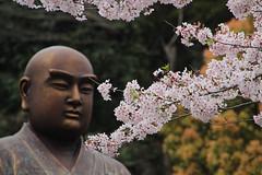 Kamakura | Buddha & Sakura (Toni Kaarttinen) Tags: japan  japonia    jap japonsko jaapan  japani japon xapn    japn jepang an tseapin giappone  japna japonija  japo  japonska japn hapon  japonya nht bn japanese kamakura formercapital hanami sakura cherryblossom cherryblossoms cherries temple shrine zen garden buddha