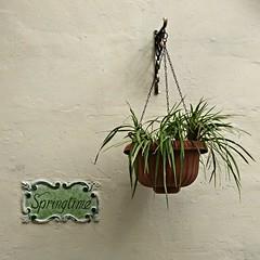 Springtime (maramillo) Tags: maramillo malta springtime plant pot word hang bigmomma pregamewinner tcf friendlychallenges