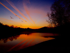 ducks fly away before the sun comes (hans 1960) Tags: trees sky sun reflection nature water yellow sunrise see wasser colours natur ducks himmel gelb ponds sonne reflexion bume sonnenaufgang spiegelung farben seacape blua mygearandme photographyforrecreation rememberthatmomentlevel1