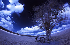 45ssmiles :-)   (Explore) (Kriegaffe 9) Tags: blue sky tree grass bike clouds ir niche fisheye cycle if infrared singelspeed samyang indyfabindependentfabrication