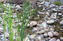 Creek at the Eurobodalla Botanic Gardens (Eurobodalla) Tags: nature water gardens creek stones botanic lush eurobodalla