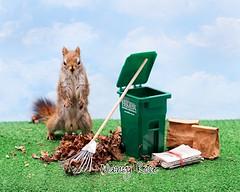 Seriously, you want ME to pick all this up? (Nancy Rose) Tags: leaves miniature newspaper spring garbage squirrel lawn cleanup litter rake handcrafted bags recycle greenbin 5538edit
