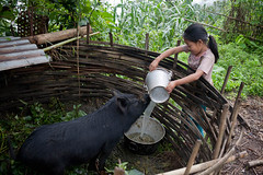 Sanju feeding a pig at home. (ActionAid UK) Tags: poverty charity school nepal home girl animal rural children pig education child feeding working photojournalism documentary domestic will gift agency labour secondary lower development ngo jyoti actionaid