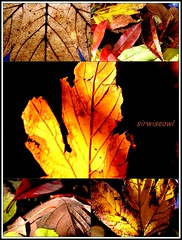 Autumn Enchantment (sirwiseowl) Tags: autumn leaves collage words tabletop handful