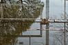 ABC of nature (glukorizon) Tags: lake plant reflection tree bird animal animals metal fence pond meer branch nest nederland delft boom dier plas tak vogel metaal hek odc zuidholland reflectie hertenkamp spiegeling waterhoen commonmoorhen schutting delftsehout odc2 ourdailychallenge